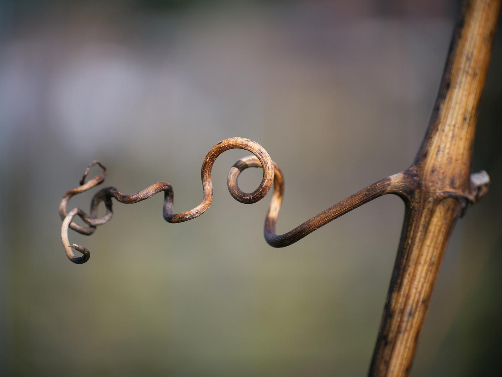 Curlicue copyright 2017 Anja Pietsch